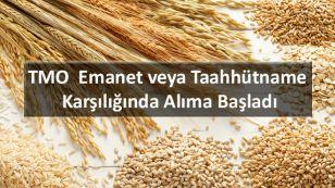 2017 yılı buğday üretiminin geçen yıla göre % 6 artışla 21,8 milyon ton, arpa üretiminin %12 artışla 7,5 milyon ton olarak gerçekleşeceği tahmin edilmektedir.