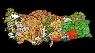 T.C. Tarım ve Orman Bakanlığı tarafından 2017 yılında başlatılan 'Havza Bazlı Destekleme Modeli' kapsamında tarım havzalarında desteklenecek ürün listeleri belli olmuştur.